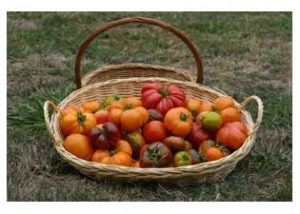 Freshly picked heirloom tomatoes from the area around Dundee Bistro.