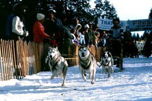 Mushing in Central Oregon