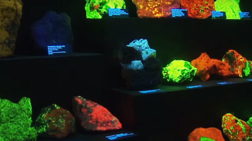 Bioluminescent rocks glow in black light at Rice Northwest Museum of Rocks and Minerals.