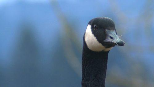 Birding in Southern Oregon.