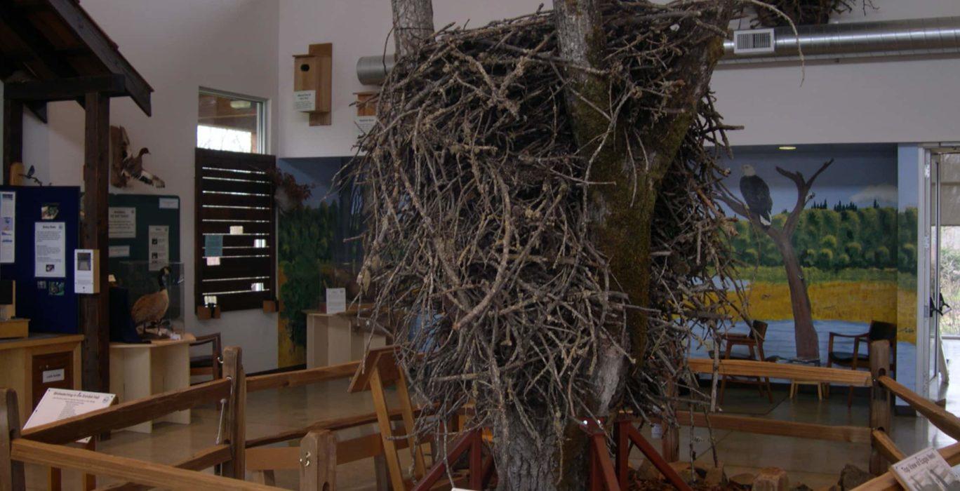 Eagle nest at Jackson Bottom Wetlands Preserve