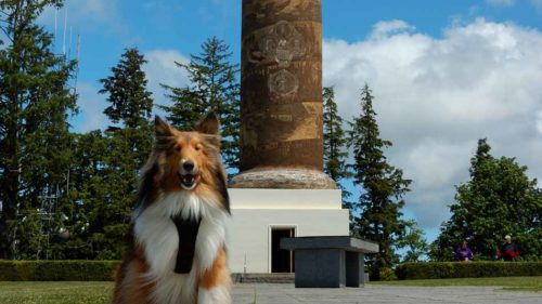 Chase at the Astoria Column.