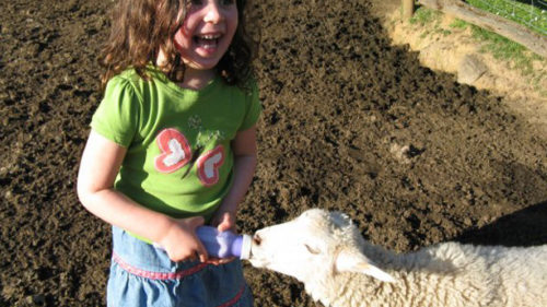 Visitors can feed the sheep and help with other chores on the farm at Leaping Lamb Farm Stay in Alsea.