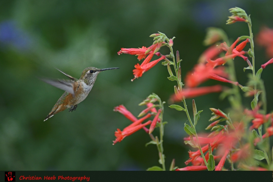Capturing Oregon: Birds of Summer - Travel Oregon