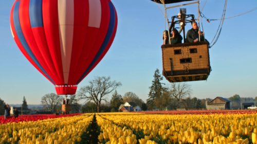 During the spring months, plan a visit to the rows of blooms at the Wooden Shoe Tulip Farm.
