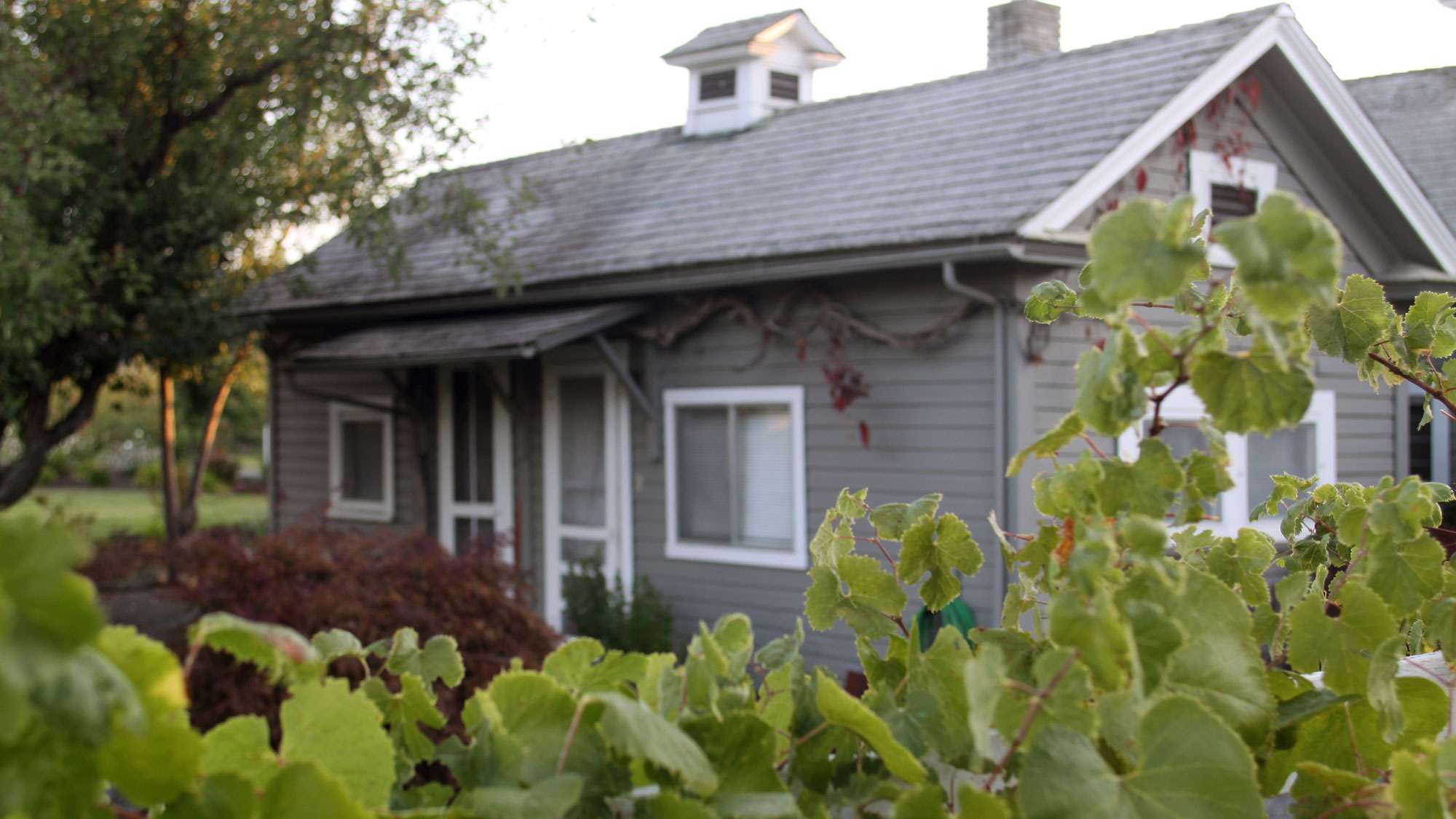 Grape vines surround the cozy gray tasting room of RoxyAnn Winery.