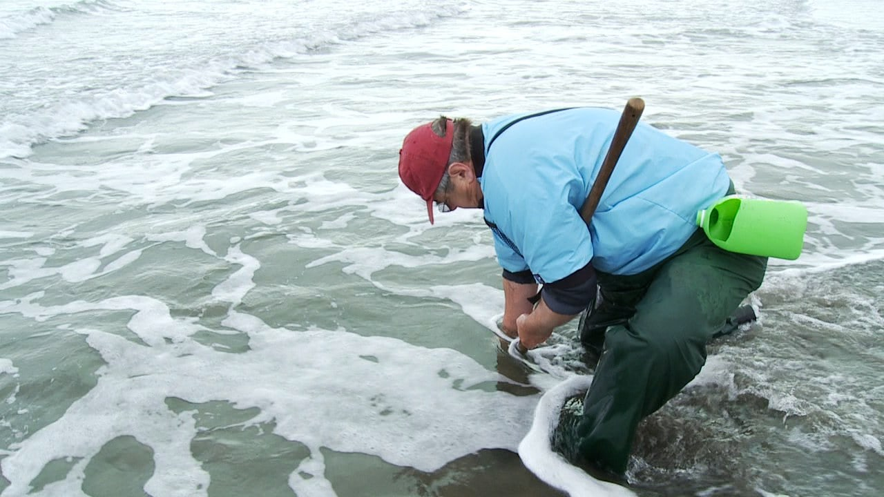 Clamming and surf perch fishing travel oregon for Surf perch fishing oregon