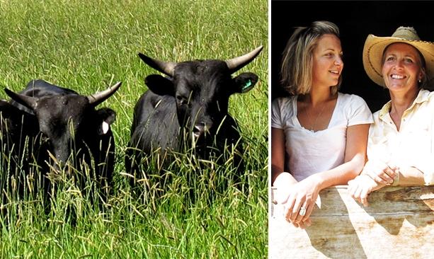 6 ranch grass fed beef travel oregon