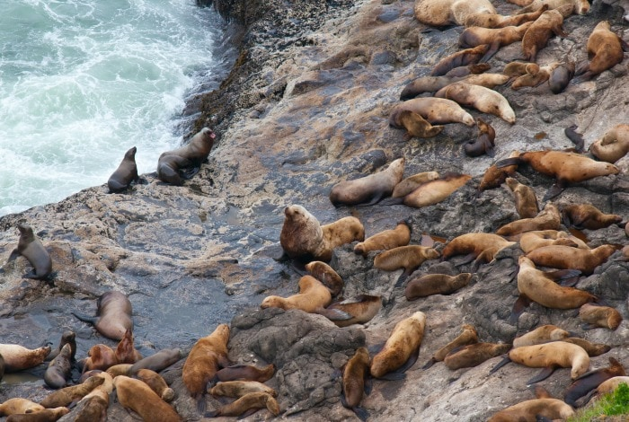 Where To See Seals And Sea Lions On The Oregon Coast