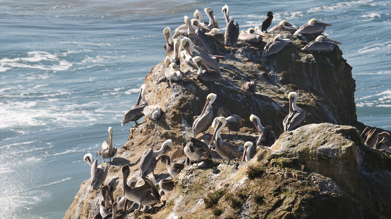Seabirds gather on a rock in the Pacific Ocean off the Oregon Coast.