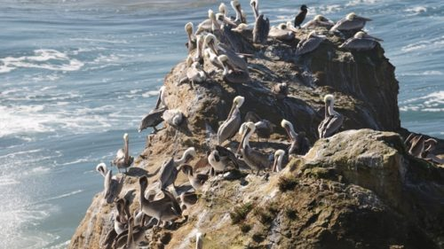 Find a variety of bird at the Cape Meares National Wildlife Refuge near Tillamook. (Photo credit: Christian Heeb)