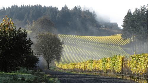 Winter's Hill Vineyard is a family-owned estate winery in the Dundee Hills and an official stop on the Willamette Valley Birding Trail.