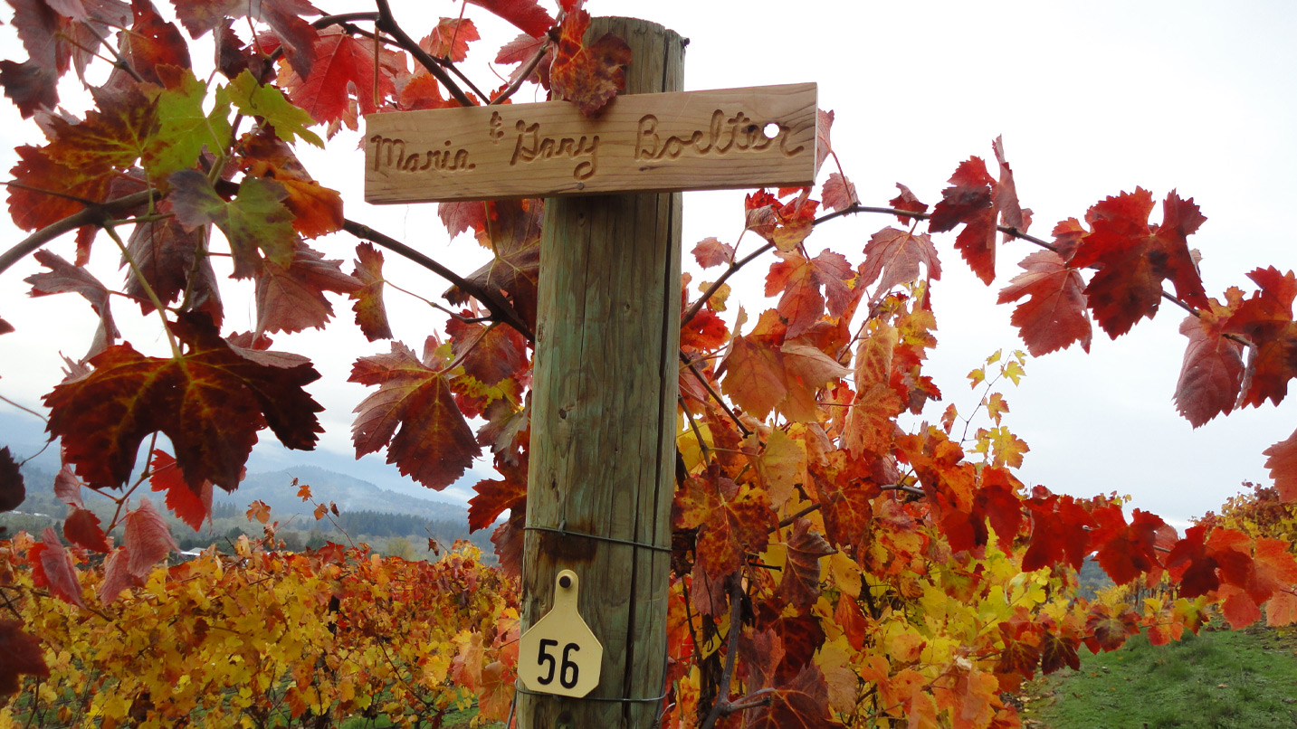 Fall colored vineyards