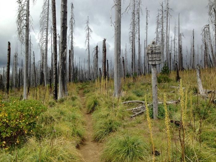 Mt. Jefferson Wilderness