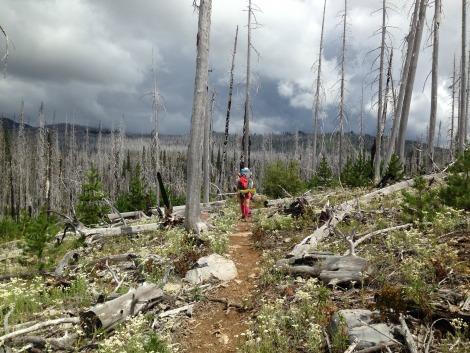 Jefferson Wilderness