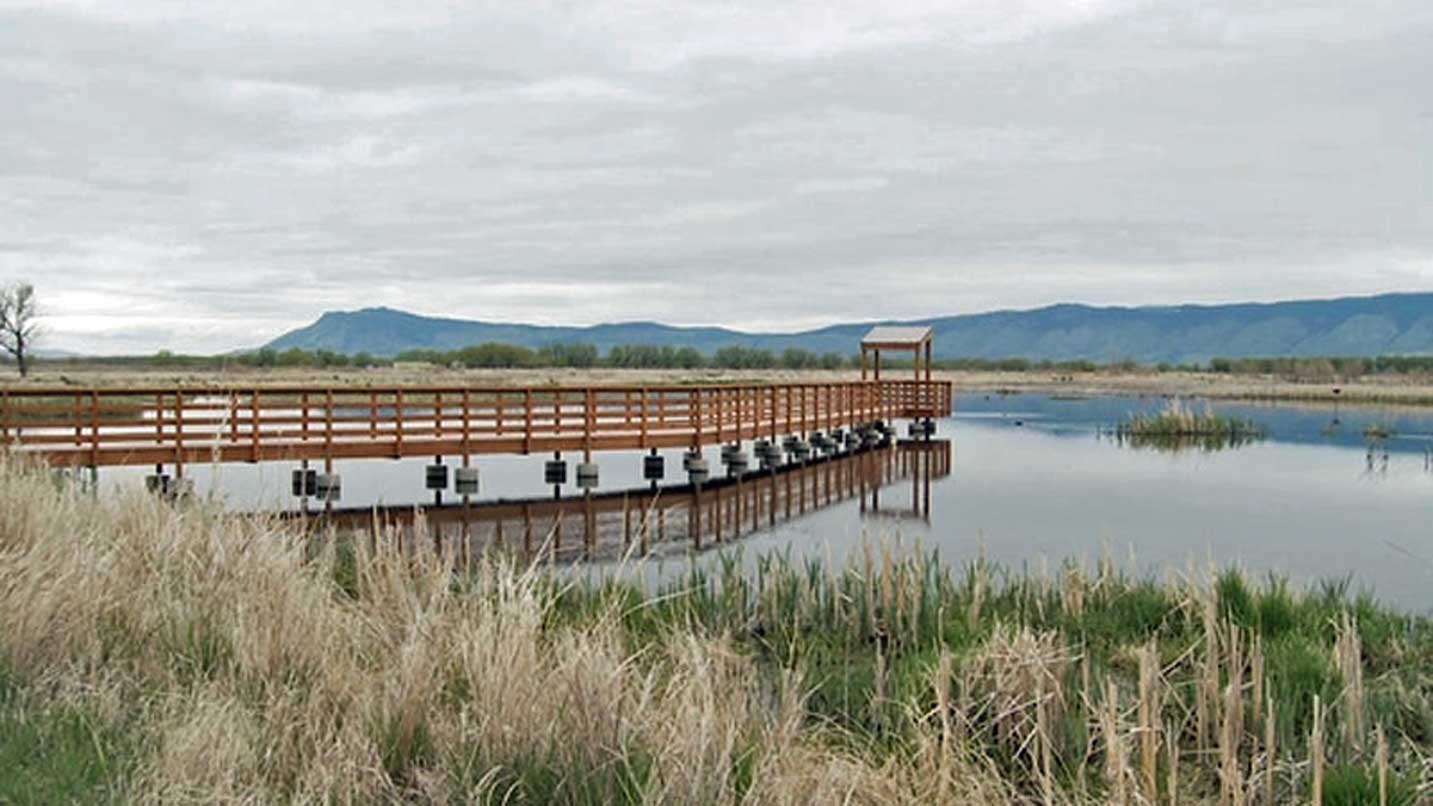 A boardwalk is situated in the middle of a wetland.