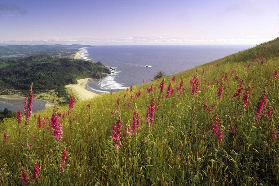 Oregon Wildflowers Wildflower Hikes In Oregon