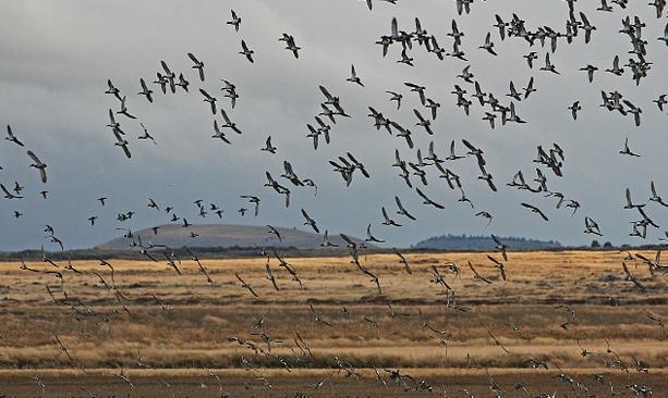 Klamath Basin birding