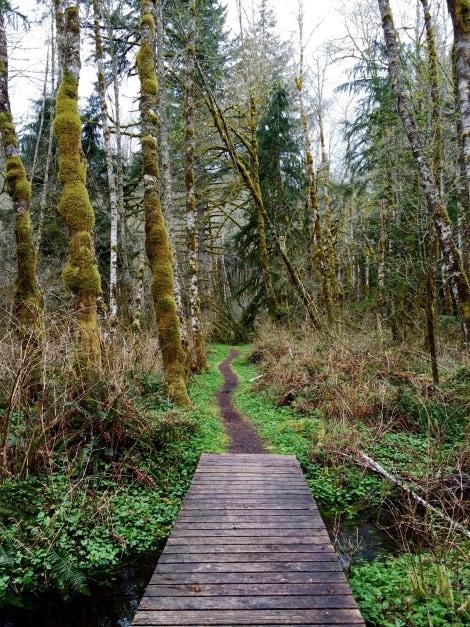 Mt. Hood Trail