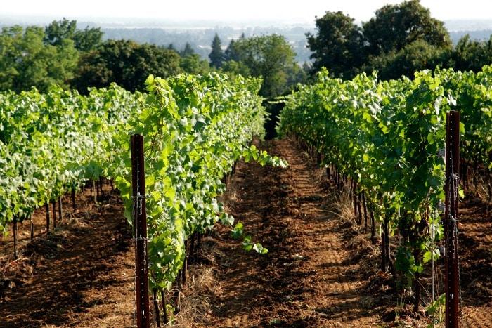 Willamette Valley vineyard