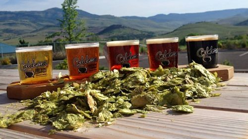 Caldera Brewing Company's Lawnmower Lager is light and easy to drink under the sun.
