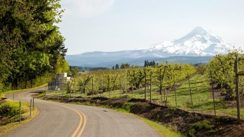 The Columbia River Gorge offers plenty of scenic mileage with the Historic Columbia River Highway, the Hood River County Fruit Loop and Highway 26 winding south around Mt. Hood.  (Photo credit: Leah Nash)