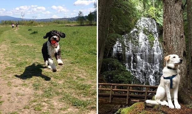 dog friendly travel Oregon