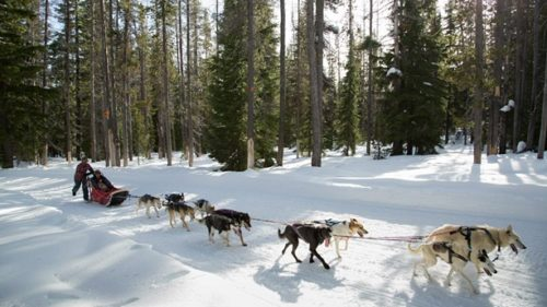 Hop behind a team of sled dogs with Oregon Trail of Dreams on Mt. Bachelor.