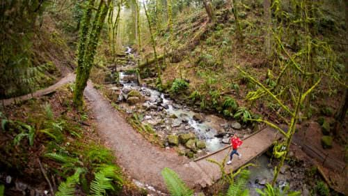 At 5,157 acres, Portland's Forest Park the largest urban nature preserve in the United States. (Photo credit: Justin Bailie/tandemstock.com)