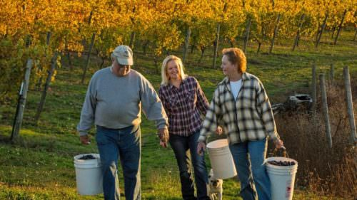 In addition to famous sparkling wine and pinot noir grapes, Kramer Vineyards has a robust sustainability program. (Photo credit: Andrea Johnson/Kramer Vineyards)