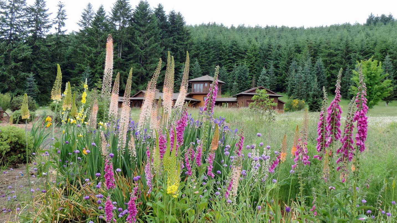 Tall purple flowers amid green bushes.