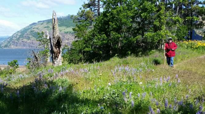 Connecting with the gorge mosier plateau trail travel oregon mosier plateau trail is a moderate 35 mile out and back hike that leads to scenic views of the columbia river gorge photo credit renee tkach publicscrutiny Image collections