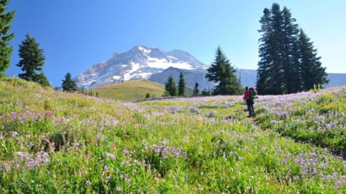Explore Mt. Hood's biking and family-friendly hiking trails in the summer, including the prized Paradise Park Loop. (Photo credit: Cheryl Hill)