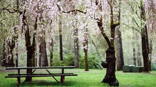 Picnic, fish or just enjoy the scenery at Indian Mary Park, about 16 miles northwest of Grants Pass.