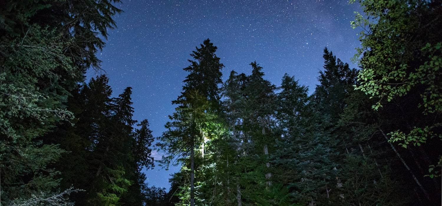 Opal Creek Wilderness at night