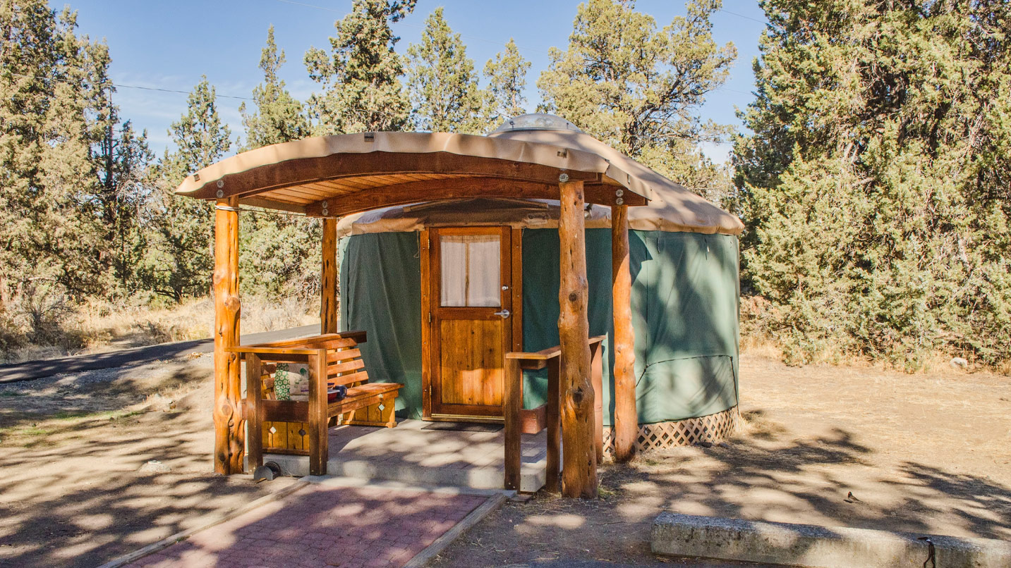 A yurt sits in a pine forest