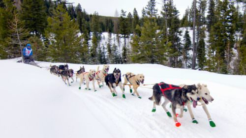 January 18 through 21, 2017, scores of mushers and hundreds of dogs will fill the streets of Joseph and Enterprise in preparation for three thrilling races.