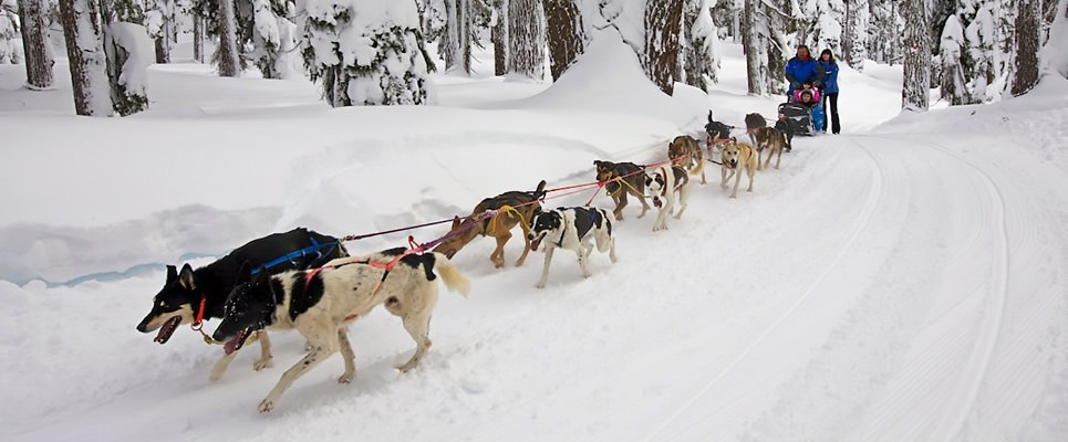 Central_OldSchool_Dogsled