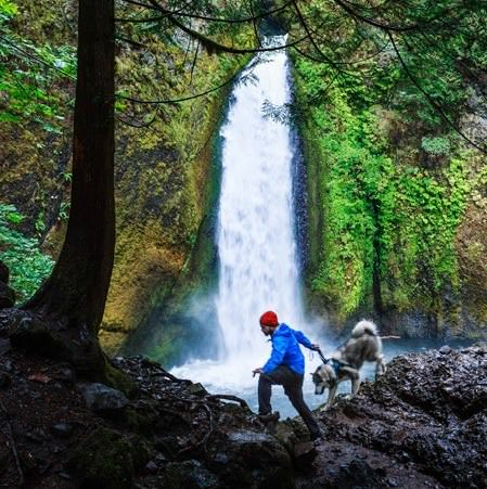 A Dog's Guide to the Gorge and Mt  Hood - Travel Oregon