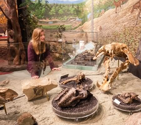 A person looks at an exhibit of dinosaur bones.