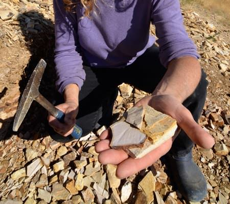 A person holds fossils in their hand.