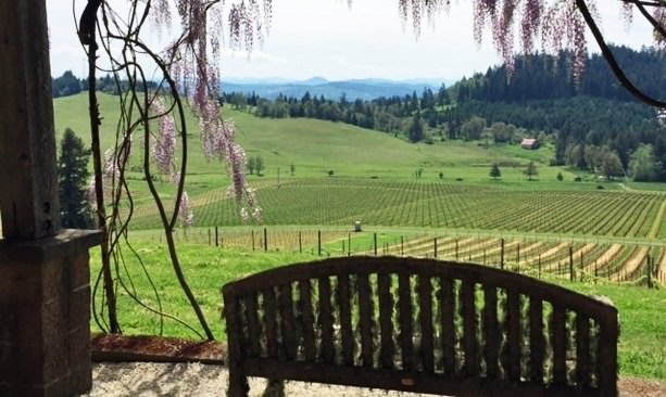 View from patio at Iris Vineyards