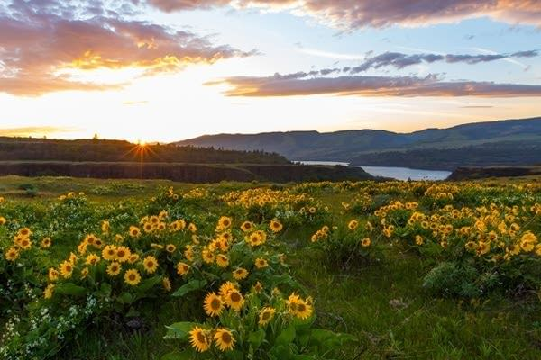 Rowena Crest covered in wildflowers at sunset