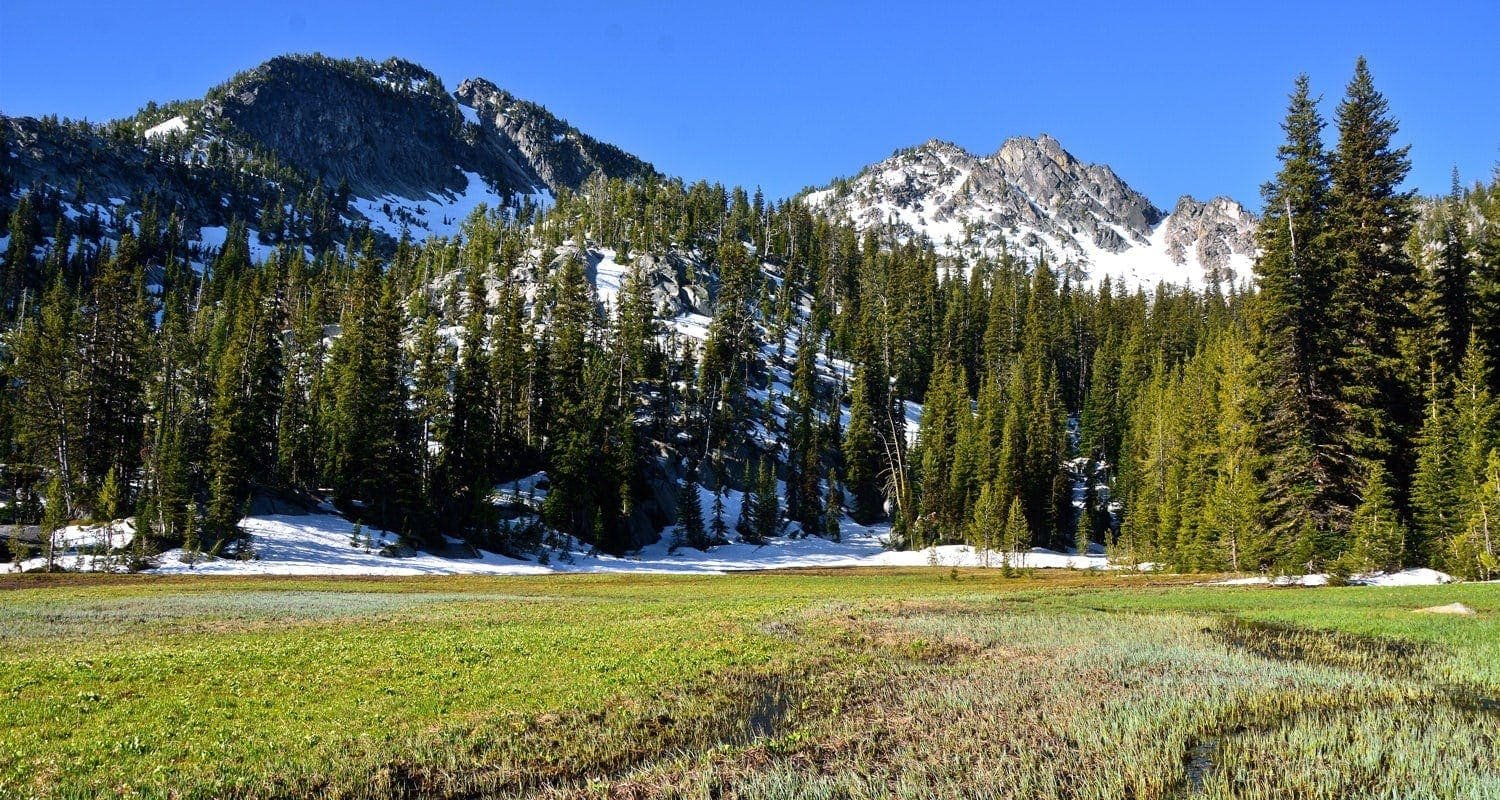 Alpine meadow in the Elkhorns