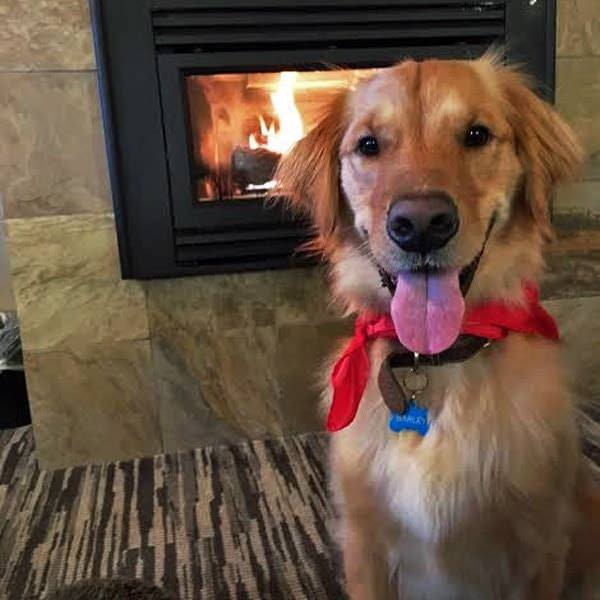 Happy dog in front of fireplace at pet-friendly Salishan