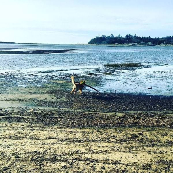 Dog playing fetch on the beach
