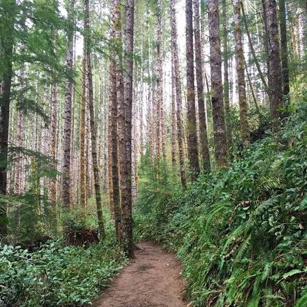 Trail in Siuslaw National Forest