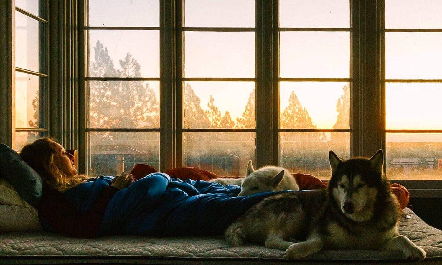 Girl and her pups in bed looking out the window of the tower