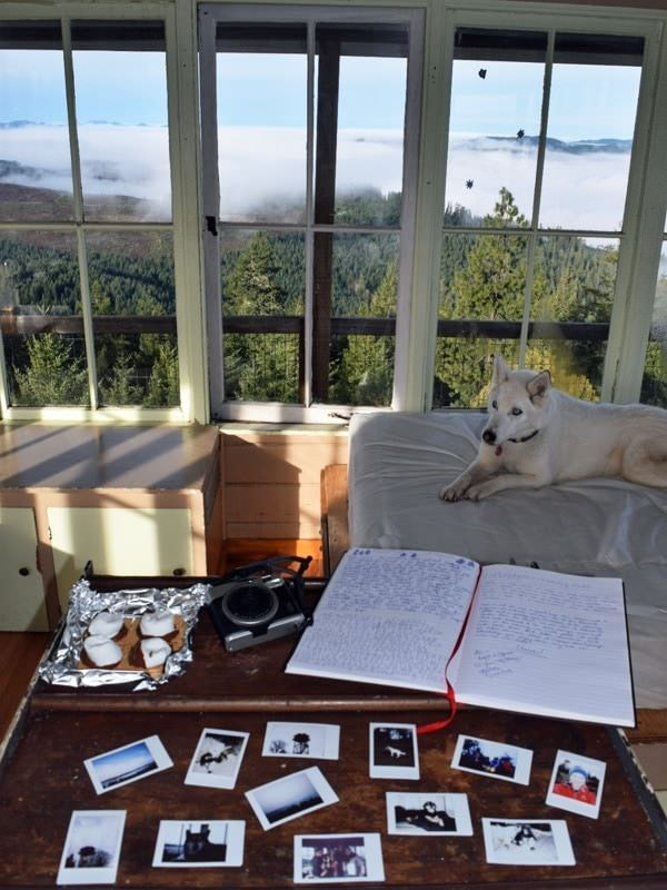 Photos on table, husky dog on bed and view of forest from window