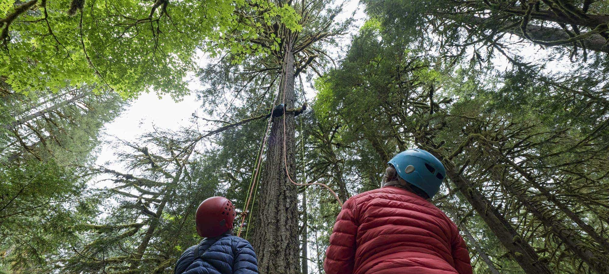 Children look up into the trees at climber